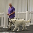 AKC Canine Good Citizen Program (CGC)